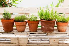 How To Keep Mosquitoes Away From Backyard Plants That Repel Mosquitoes Naturally Reader U0027s Digest