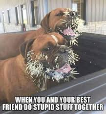 Stupid Friends Meme - cool doing stupid things together funny pinterest funny