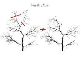 pruning to reduce regrowth
