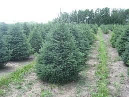 varieties of wholesale trees sold in minnesota and the midwest
