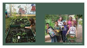 Urban Garden Denver - maple grove garden ppt download