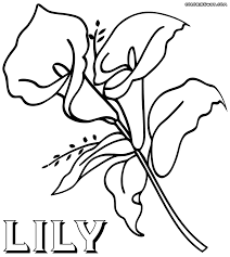 bold design lily coloring pages spring flowers pageseaster page