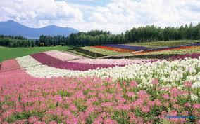 flowers garden city flower garden 495164 walldevil