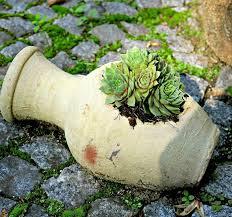 planter for succulents succulent planters 25 fun looks that show you can plant succulents