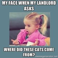 Where Did Memes Come From - property management memes real property management southern utah