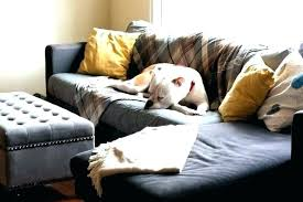best sofa fabric for dogs best sofa fabric for dogs amazing best couch for dog owners for