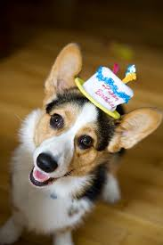 Corgi Birthday Meme - fun hat friday the daily corgi