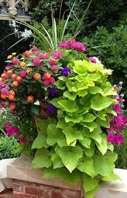 container flower gardening the gardens