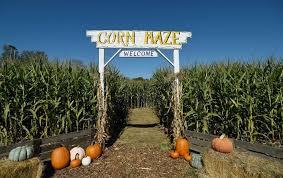 Denver Botanic Gardens Corn Maze Pumpkin Festival And Corn Maze At Denver Botanic Gardens Chatfield