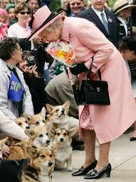 queen elizabeth dog queen elizabeth ii stops to view a group of corgi dogs abc news