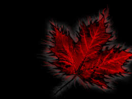 maple leaf canadian wallpapers cka military pinterest
