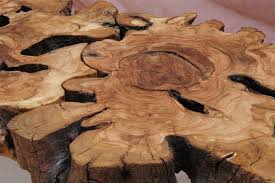 tree cross section table cross section of tree for tabletop wooden it be lovely