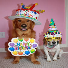 Birthday Dog Meme - best of best 25 happy birthday dog meme ideas on pinterest