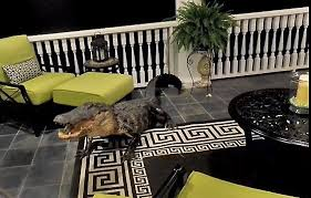 Patio Furniture Mt Pleasant Sc by Alligator Climbs To A Second Story Mount Pleasant Porch Through A