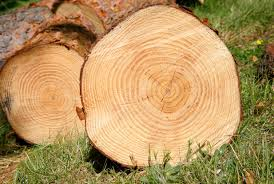 Tree-Rings Reveal Evidence Of Long-Term <b>Droughts</b> - Science <b>...</b>