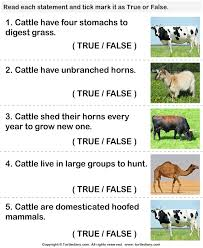 facts about cattle worksheet turtle diary