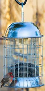 best 25 squirrel proof bird feeders ideas on pinterest bird