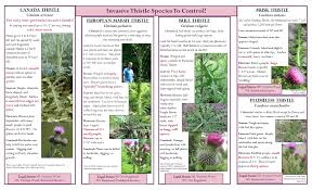 native michigan plants thistles northwest michigan invasive species network