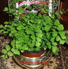 Easy Care Indoor Plants My Household Capers Gardening Not So Easy Care Indoor Plants