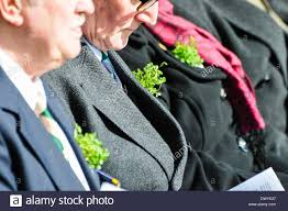 people wear sprigs of shamrock on their lapels stock photo