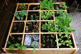 square foot or meter gardening the green info inspiration