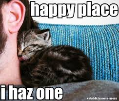Sleepy Kitty Meme - the 16 best images about kitty corner on pinterest cats there