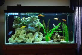 cuisine extra large aquarium decorations ideas extra large
