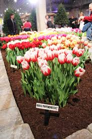 indoor spring 2013 chicago flower and garden show u2014 anna maria locke