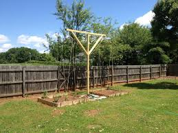 hoppiton the hop trellis is up
