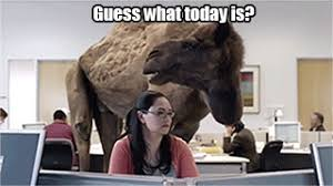 Hump Day Camel Meme - day hump gif find share on giphy