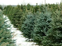 delaware continues christmas tree recycling tradition delmarvalife