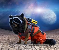 Guardians Galaxy Halloween Costumes Diy Guardians Galaxy Halloween Costume Diy Dog