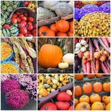 cherry point farm market hillcrest farmers market u2013 fresh fabulous just like hillcrest