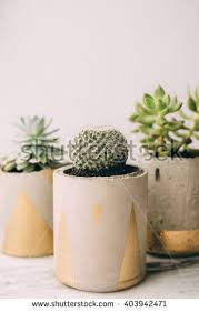 concrete modern planter stock images royalty free images