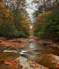 West Virginia travel fox images 108 best backgrounds images autumn autumn photos jpg