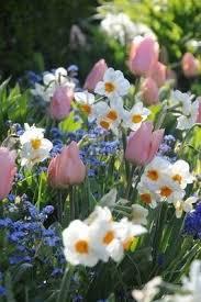 Spring Flower Pictures Best 25 Spring Flowers Ideas On Pinterest Spring Flower