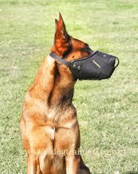 belgian malinois k9 attack belgian malinois muzzle uk heavy duty dog muzzle k9 50 50
