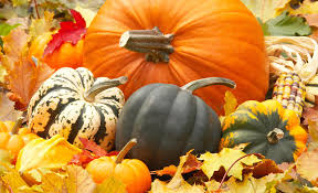 photo collection autumn pumpkin thanksgiving background