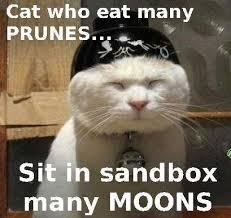 Confucius Says Meme - 53 best confucius says images on pinterest confucius say funny