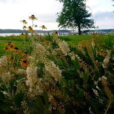 chesapeake bay native plants native plant sales u0026 hometown habitat screening in glenwood md