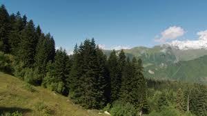 mountain forest 2k stock 635 433 009 framepool