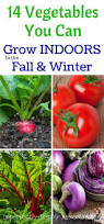14 vegetables you can grow indoors in the fall u0026 winter gardening