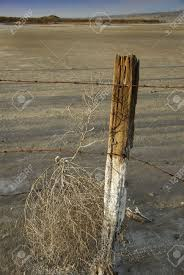 an old fence post and rusted barbed wire traps a tumbleweed on