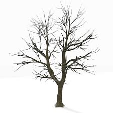 coloring page bare tree coloring home