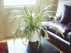 image result for indoor ornamental plants in the philippines