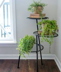 beautiful house plants joanna gaines thinks everybody should have these beautiful