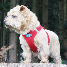my curli curli vest air mesh harness for dogs now reduced from only 12 50