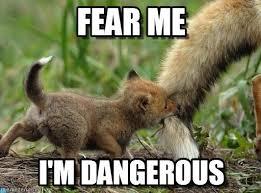 Fear Meme - fear me wolfy meme on memegen
