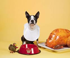 don t feed your thanksgiving table scraps times free press