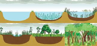ecological succession texas gateway